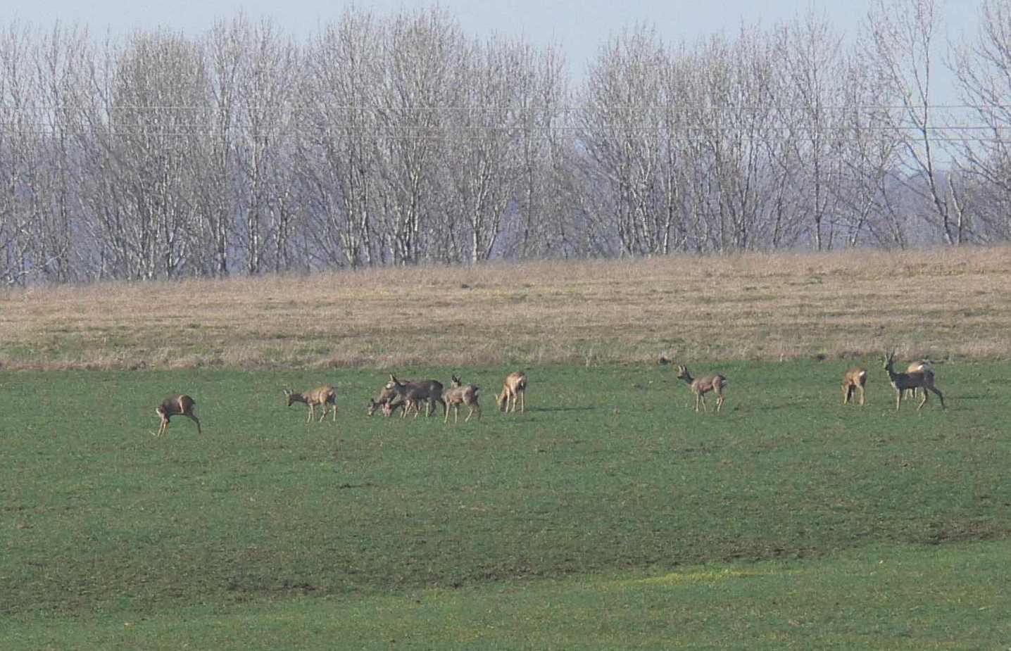http://www.mroczko.com.pl/zdjecia/Mcze/fauna.jpg